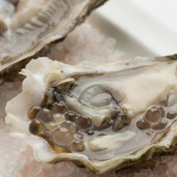 white pearls and oyster