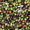Extravirgin Olive Oil - Organic 500 ml - Ferricinotto