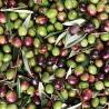 Olio Extravergine di Oliva BIO - Ferricinotto 500 ml